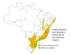 remanescente Mata Atlântica portugues